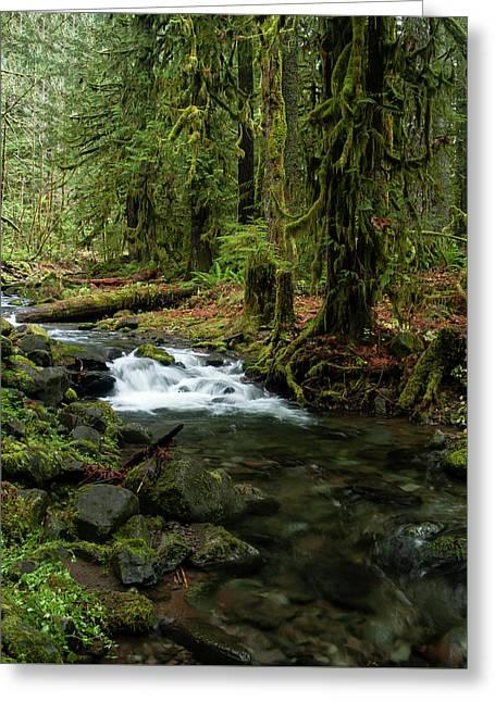 Mossy Cascade Greeting Card