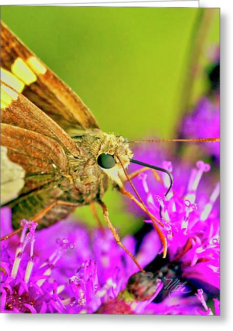 Moth On Purple Flower Greeting Card