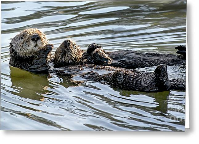 Mother Sea Otter Relaxing With Baby Greeting Card