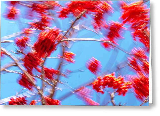 Mountain Ash Tree With Berries In Very Strong Wind Greeting Card