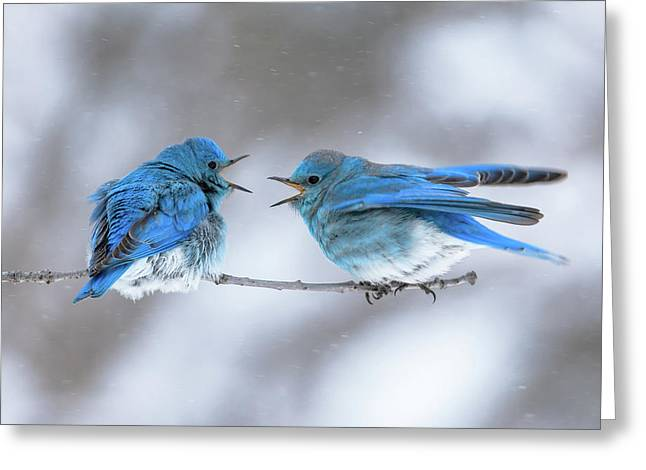 Mountain Bluebirds On A Snowy Day Greeting Card