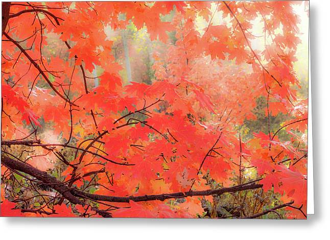 Mountain Maple Color Greeting Card by Leland D Howard