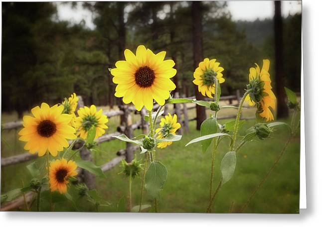 Mountain Sunflowers Greeting Card