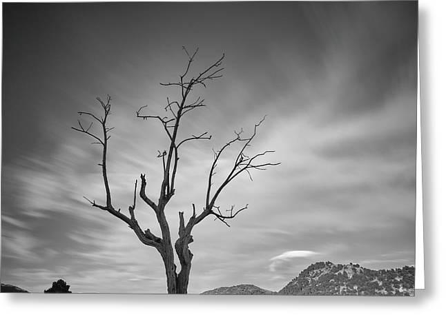 Mountains Tree. Spring Sunset Greeting Card