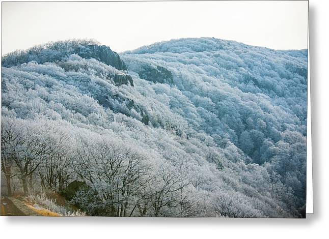 Mountainside Hoarfrost Greeting Card
