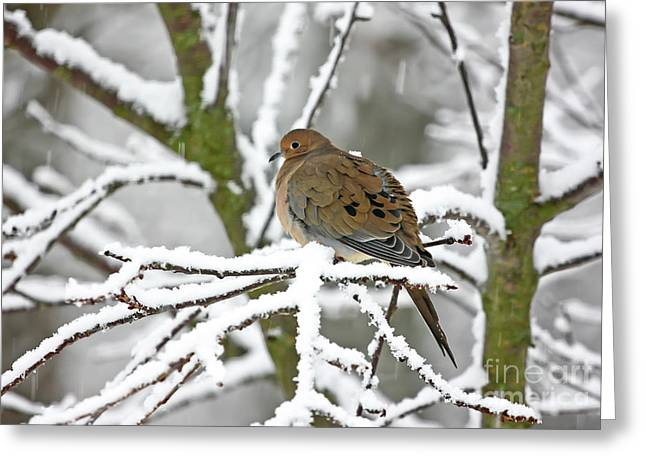 Mourning Dove In Snowstorm Greeting Card