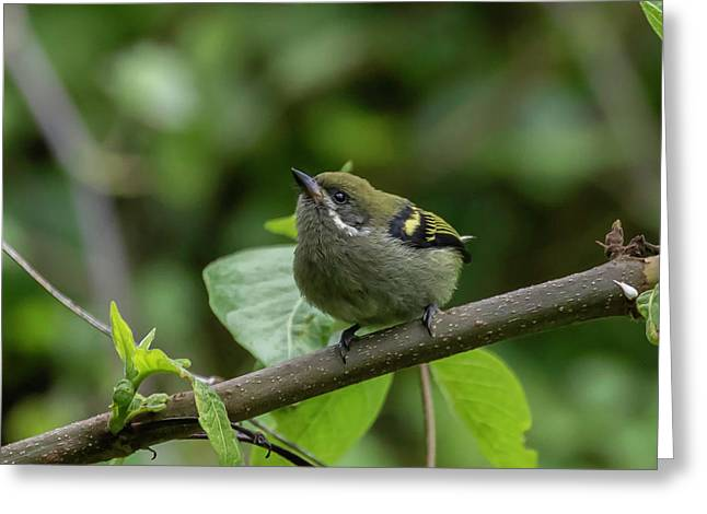 Moustached Tinkerbird Greeting Card
