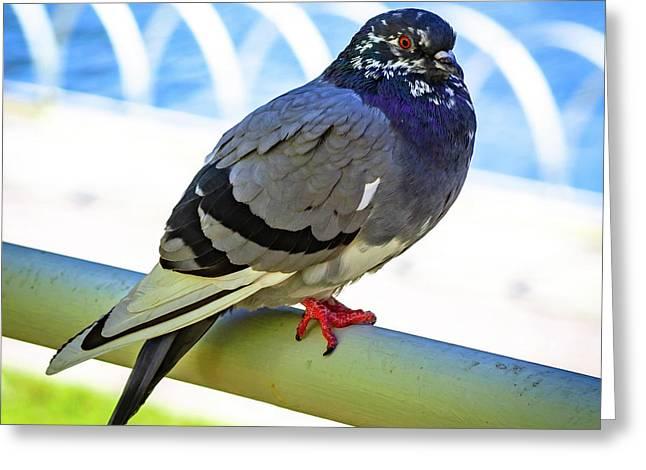 Mr. Pigeon Greeting Card