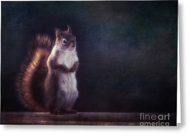 Mr. Squirrel Greeting Card