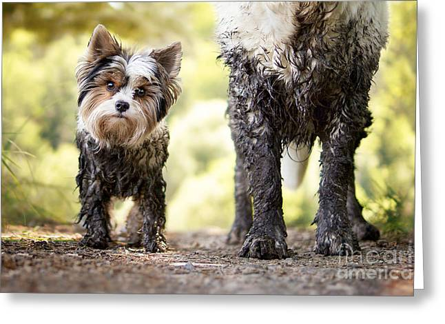 Muddy Little Dog Stands Next To A Muddy Greeting Card by Stickler