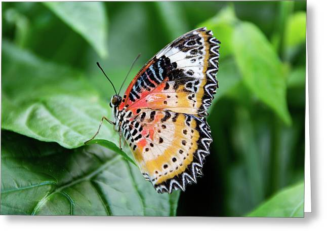 Multi Colored Butterfly Greeting Card