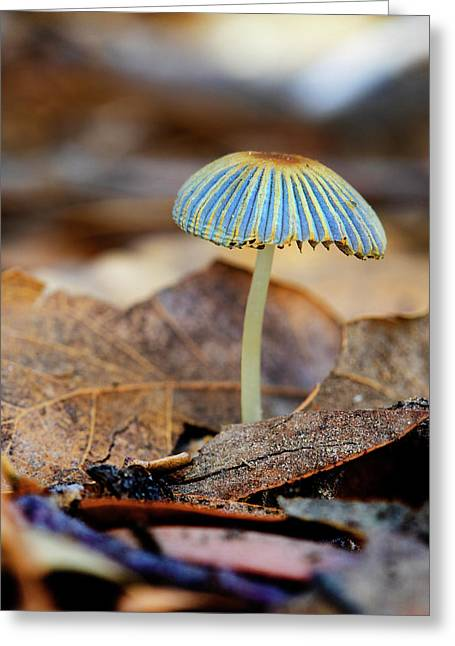 Mushroom Under The Oak Tree Greeting Card