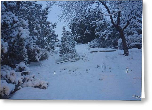 My Colorado Backyard Greeting Card