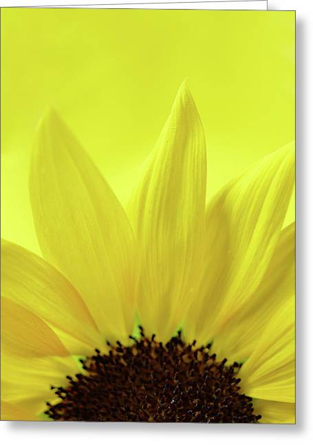 Greeting Card featuring the photograph My Sunshine by Michelle Wermuth