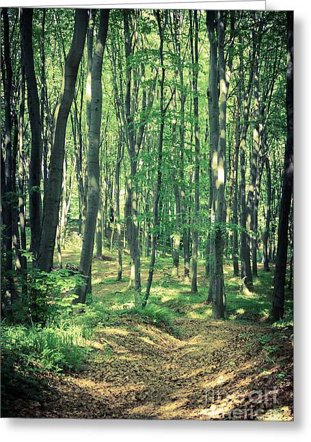 Mysterious Dark Forest Near Rzeszow Greeting Card