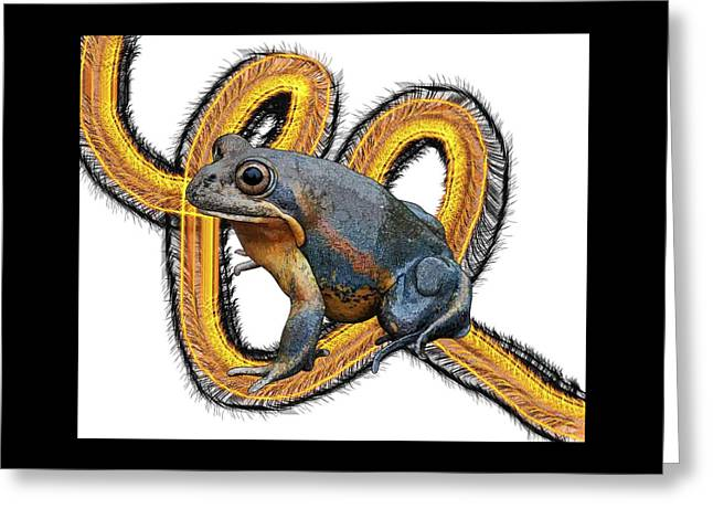 N Is For Northern Banjo Frog Greeting Card