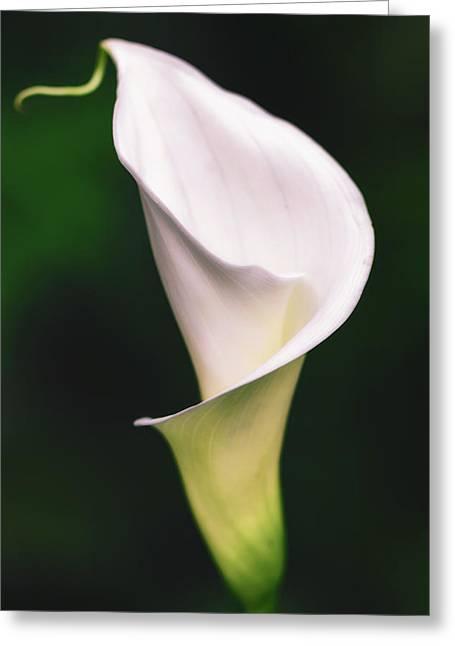 Natural Grace Greeting Card