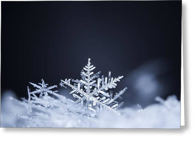 Natural Snowflakes On Snow, Photo Real Greeting Card