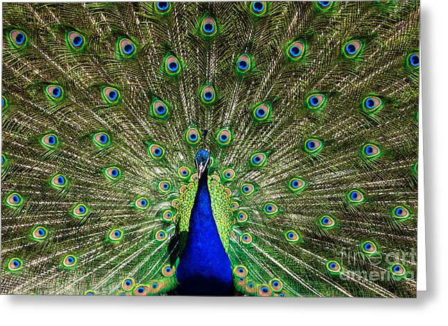 Natural, Symmetric And Colorful Male Greeting Card