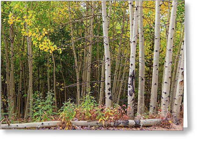 Greeting Card featuring the photograph Nature Fallen by James BO Insogna