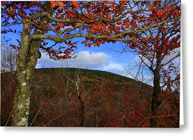 Greeting Card featuring the photograph Nature Frames Mount Greylock's Tower by Raymond Salani III