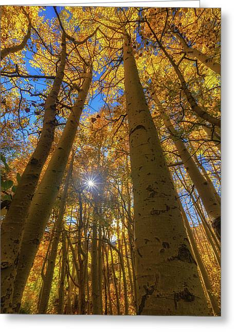 Greeting Card featuring the photograph Natures Gold by Tassanee Angiolillo