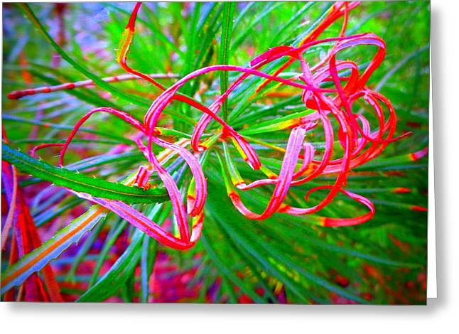 Nature's  Ribbons Greeting Card