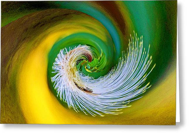Nature's Spiral Greeting Card