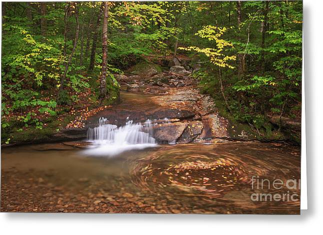 Greeting Card featuring the photograph Nature's Swirl by Sharon Seaward