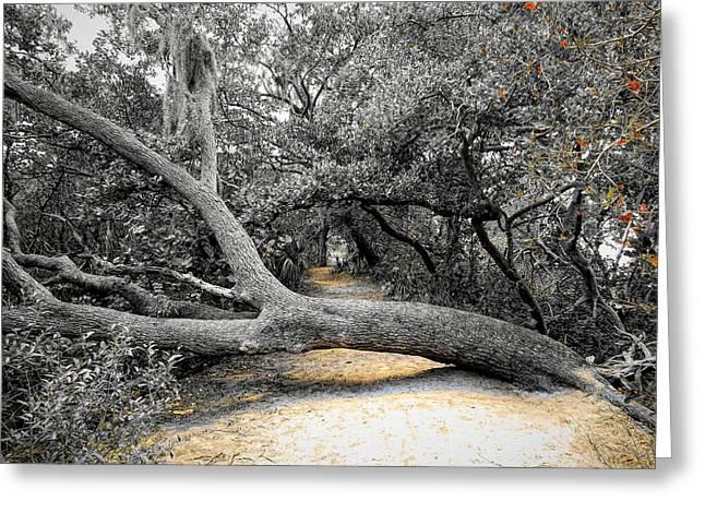 Nature's Way Greeting Card