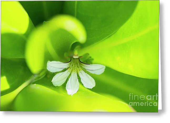 Greeting Card featuring the photograph Naupaka Kahakai Blossom by Charmian Vistaunet