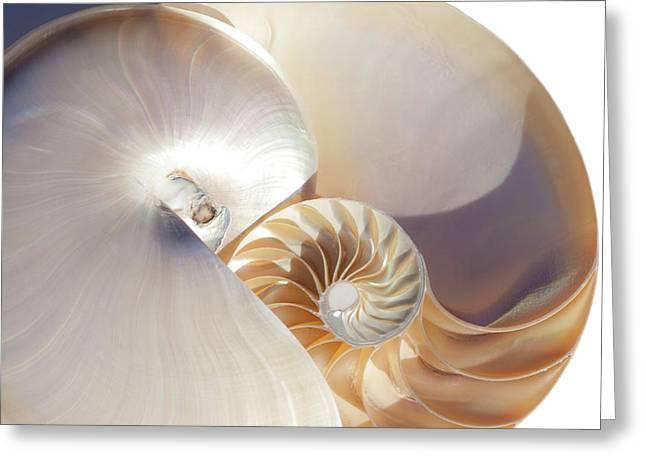 Nautilus 0454 Greeting Card
