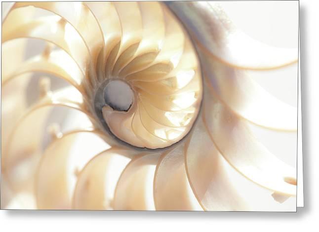 Nautilus 0472 Greeting Card