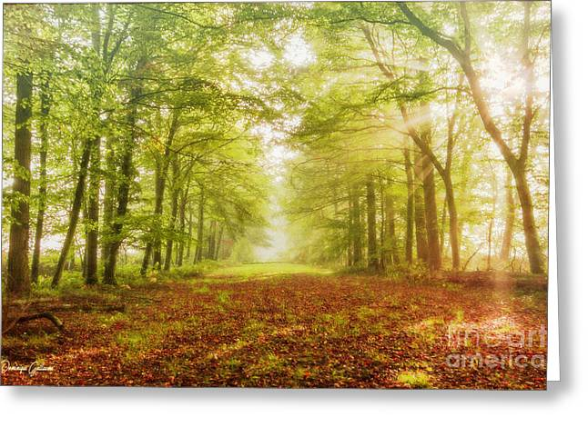 Neither Summer Nor Winter But Autumn Light Greeting Card