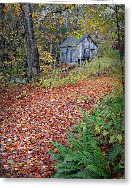 Greeting Card featuring the photograph New England Autumn Woods by Bill Wakeley