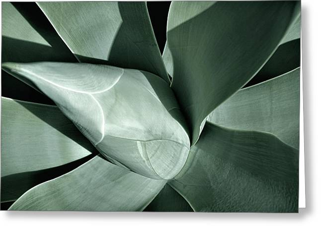 Greeting Card featuring the photograph New Growth II by Leda Robertson