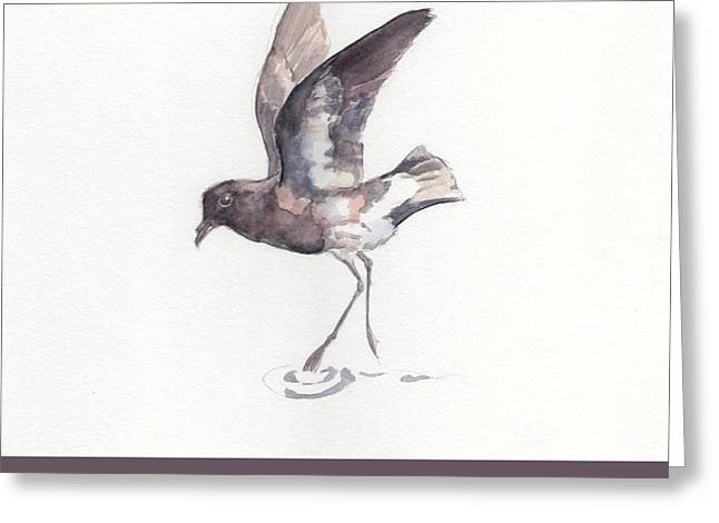 New Zealand Storm Petrel Greeting Card