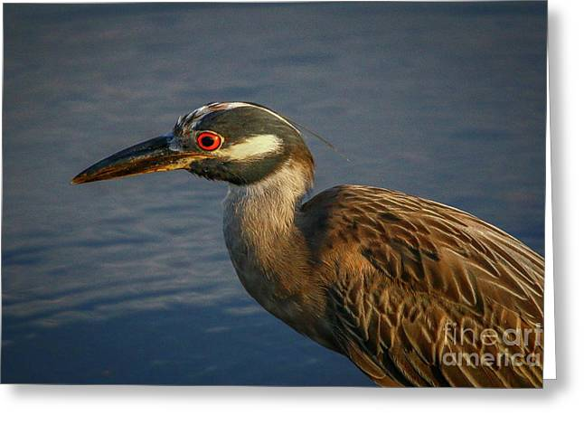 Night Heron Portrait Greeting Card