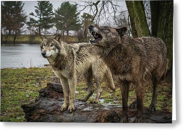 Noisy Wolf Greeting Card