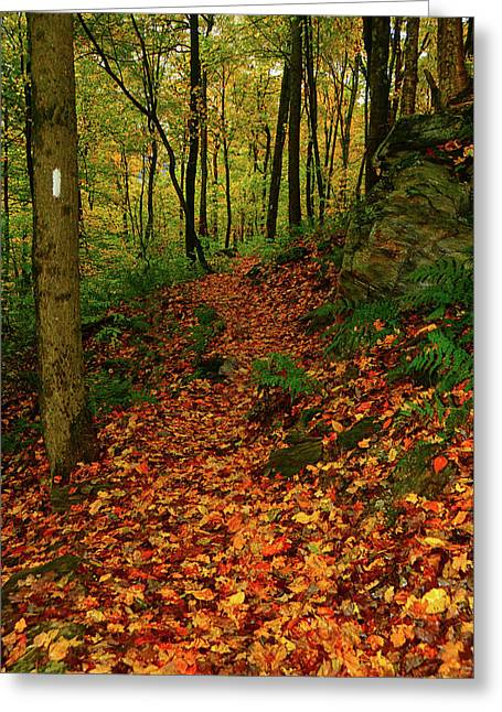 Greeting Card featuring the photograph North Side Of Mount Greylock's At by Raymond Salani III