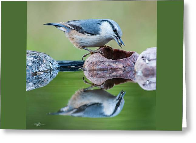 Nuthatch's Catch Greeting Card