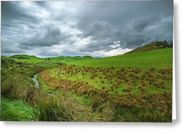 Nz Countryside Greeting Card