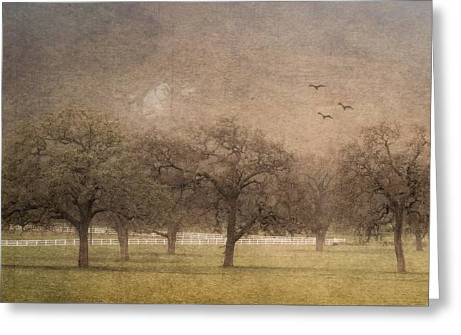 Oak Trees In Fog Greeting Card