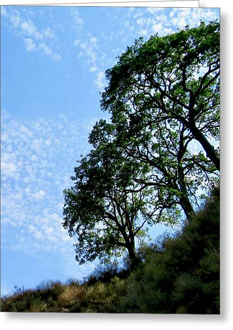 Oaks And Sky Greeting Card