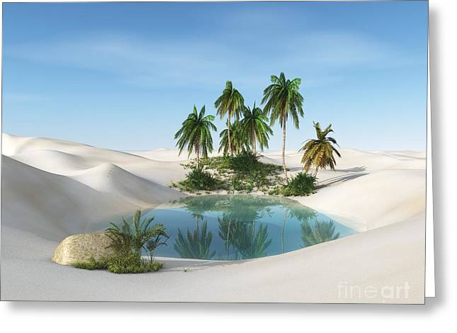 Oasis In The Desert. Palm Trees And Greeting Card