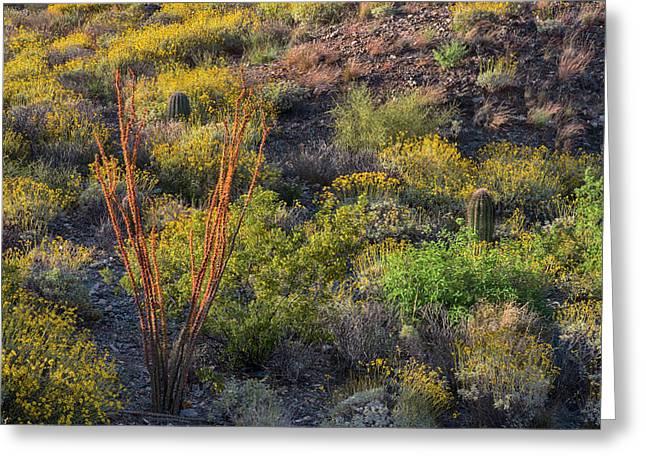 Ocotillo Blooms In Arizona Springtime Horizontal Greeting Card