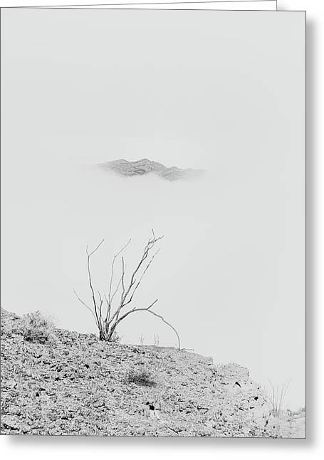 Ocotillo, Mountain And Fog Greeting Card