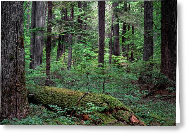 Old Growth Forest Greeting Card by Leland D Howard