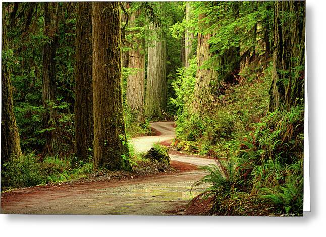 Greeting Card featuring the photograph Old Growth Forest Route by Leland D Howard