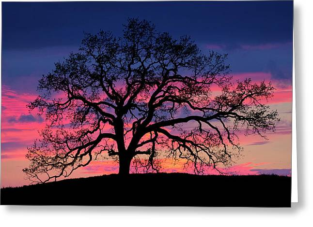Greeting Card featuring the photograph Old Oak Sunset by John Rodrigues